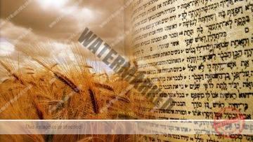 Kabbalah explains how to prepare for Shavuot to receive the Torah again – Rabbi Alon Anava