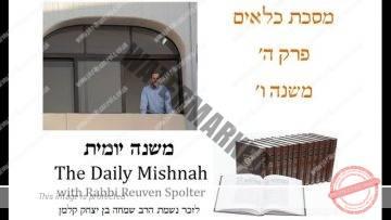 Kilayim Chapter 5 Mishnah 6