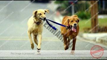 Walking Your Dog on Shabbat